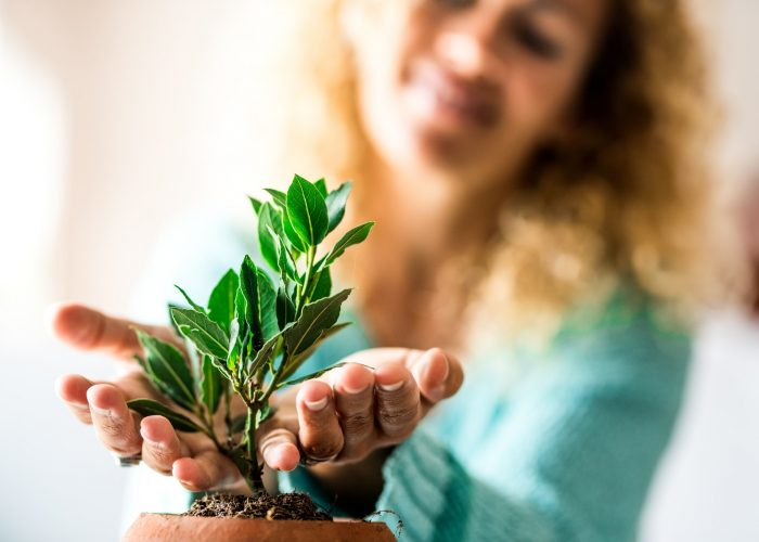 close up and portrait of woman taking care of small plant inside of he home - plant growing up